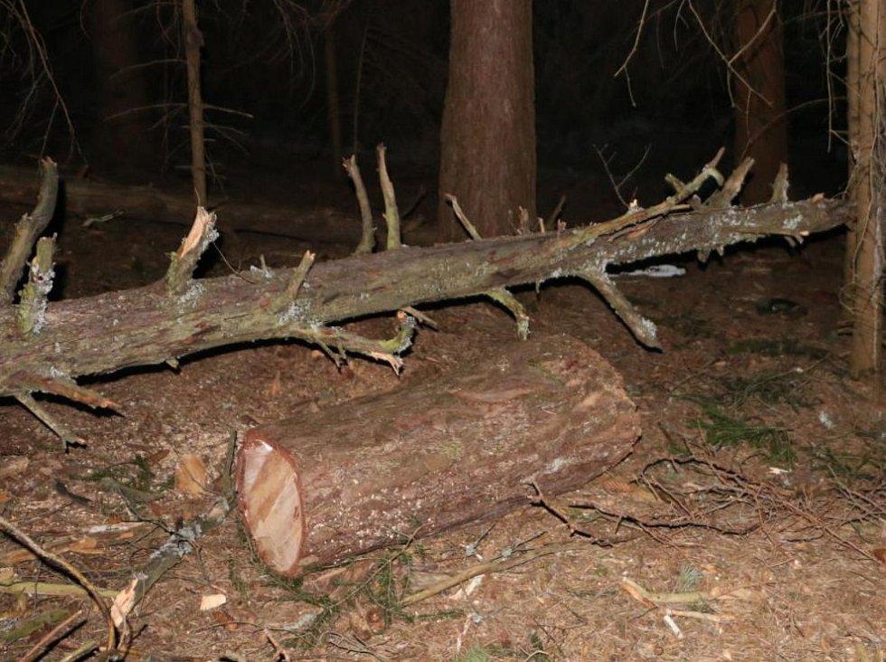 U Nových Hradů se ve čtvrtek smrtelně zranil dřevorubec. Pohled na místo tragédie v lesním masivu Jedlice.