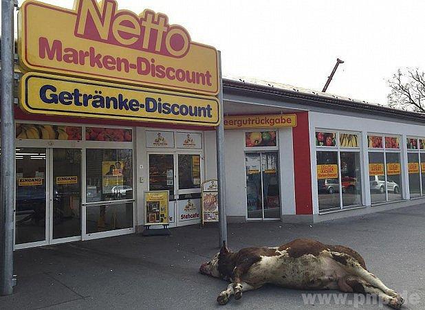 Býka zprodejny pracně vytáhli.
