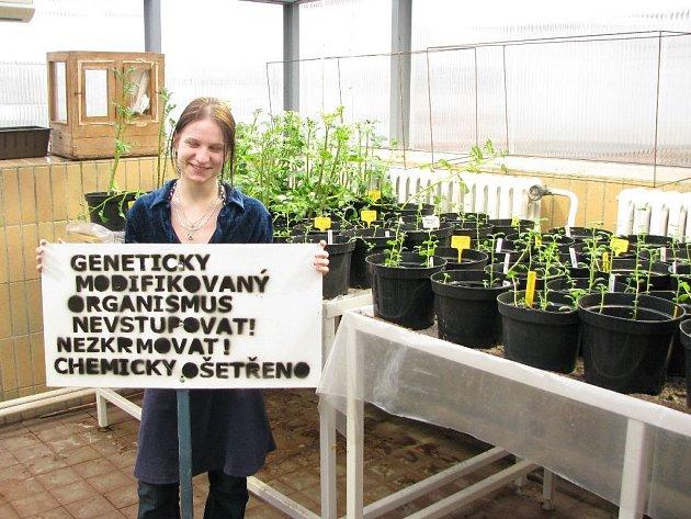 Členka výzkumného týmu z BC AV ČR, Radka Fabiánová, ukazuje cedule, které jsou rozmístěny kolem pole s pokusnou GM kukuřicí. V pozadí jsou sazenice GM brambor.