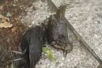 Hřbitovní Galerie Na shledanou ve Volyni připomíná kolektivní malbou na stěnách zvířata, která člověk vyhubil zejména za posledních 100 let. Na snímku mrtví ptáci před vchodem do galerie.