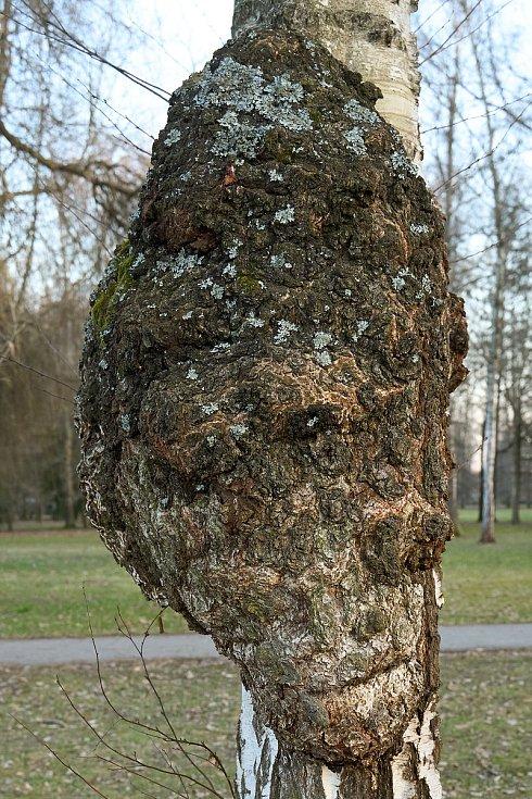 Duch stromový 11 - zombie