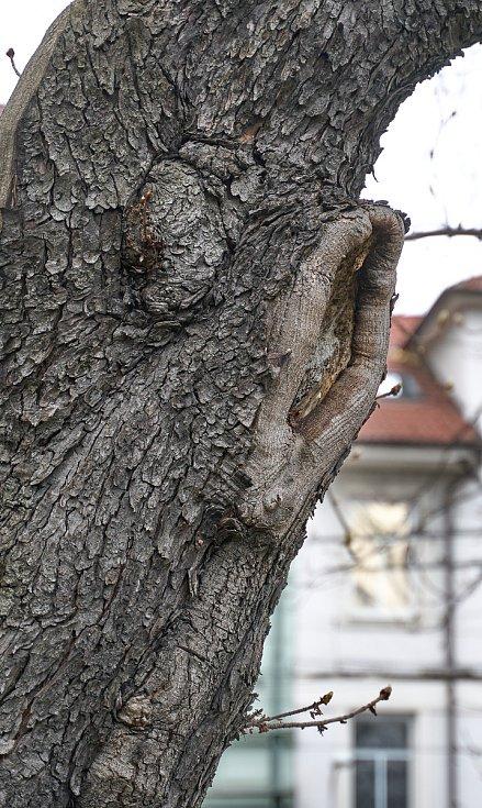 Duch stromový 20 - naslouchač levé ucho