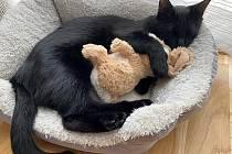 Linecké OÖN oslavily Mezinárodní den koček.