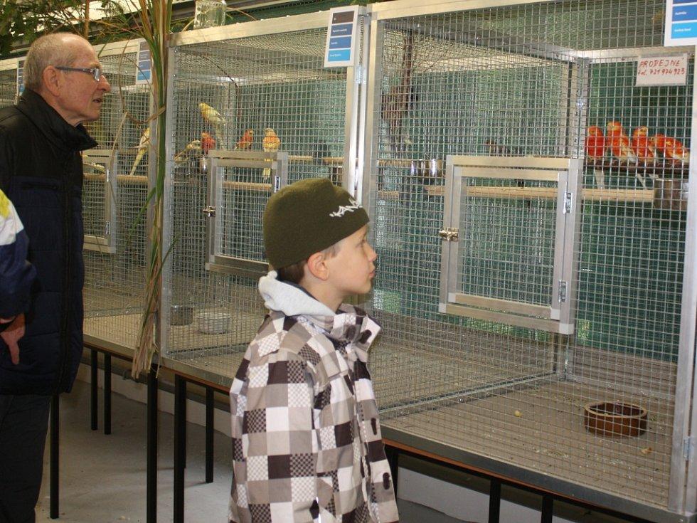 Výstava okrasného ptactva na českobudějovickém výstavišti.