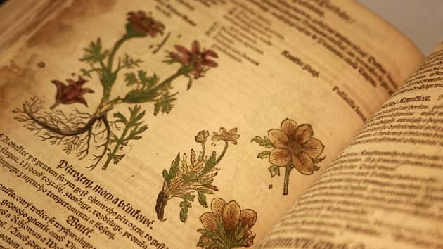 Muzeum sídlící ve volyňské tvrzi představuje zachráněné cennosti ze svých sbírek. Jedním z lákadel je Mathioliho herbář (na snímku). Výstava skončí příští neděli 11. srpna.