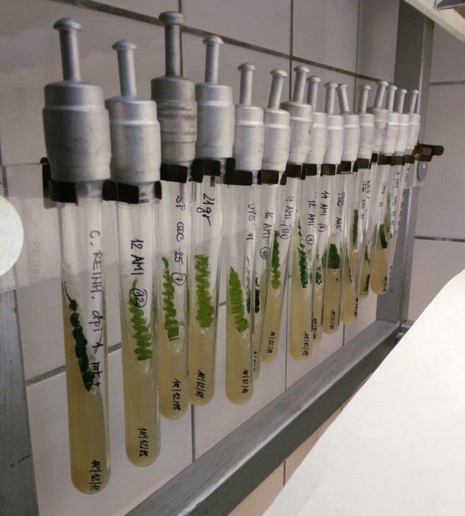 Sladkovodní řasy by nám svou schopností pohlcovat jedy mohly pomoci s přeměnou toxického prášku z elektroniky na hnojivo anebo s jeho recyklací pro opětovnou výrobu.