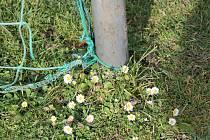 Na SKP věří, že na nově zasetém náhradním hřišti se bude lépe dařit trávě než plevelu...
