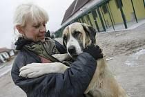 HLEDÁ DOMOV. Českobudějovickým útulkem pro opuštěná a ztracená zvířata prošlo v letošním roce již téměř 400 psů. V současné chvíli jich tu na nového majitele čeká asi dvacet. Na snímku ošetřovatelka Marcela Ježková s psí fenkou Ritou.