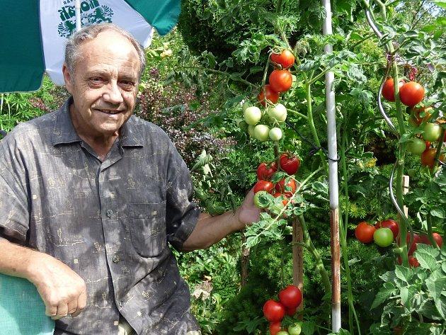 Milan Syrovátka z Českých Budějovic ukazuje svou letošní úrodu rajčat.