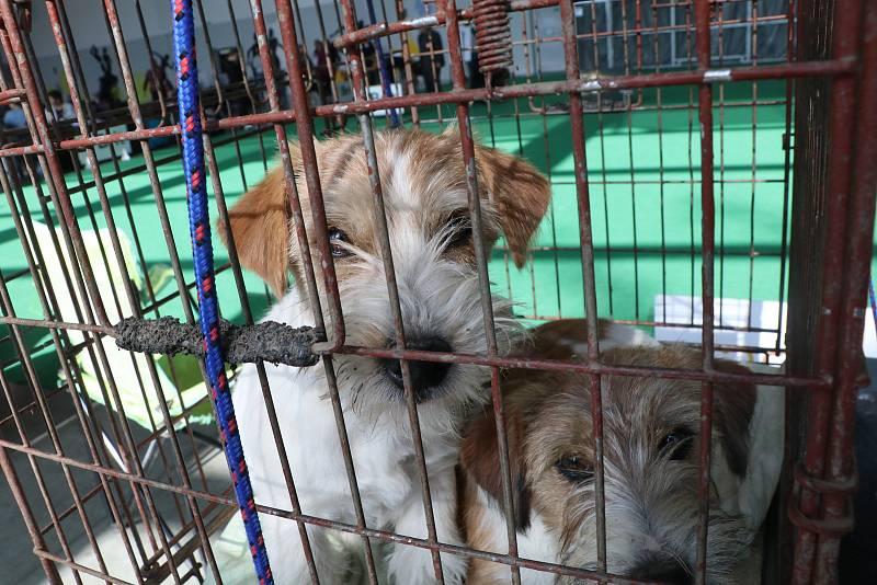Výstaviště v Českých Budějovicích o víkendu obléhali milovníci psů. Konala se zde totiž mezinárodní výstava všech plemen.