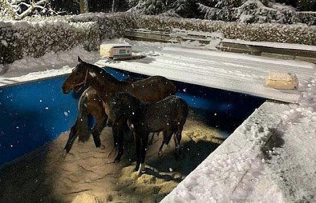 Když se koně propadnou…