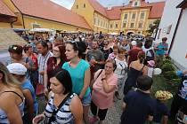 Borůvkobraní v Borovanech na Českobudějovicku.