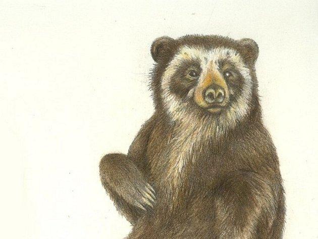 Foto jedné z ilustrací Pavla Dvorského.