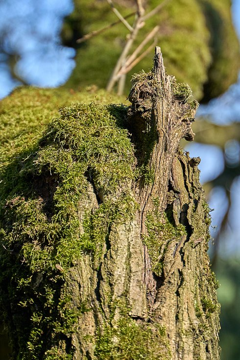 Duch stromový 33 - ptáčátko