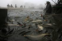 Výlov Bezdrevu je tradičně spojen s Jihočeskými rybářskými slavnostmi. Letos se budou konat 28. října od 7 hodin.