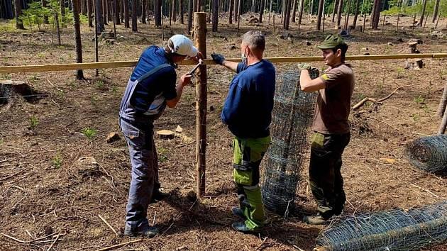 Libor Moravec z Českých Budějovic na konci roku 2019 založil iniciativu Obnovme jihočeské lesy. Na sociální síti měla obrovský ohlas a od jara 2020 dosud dobrovolníci vysázeli na 50 tisíc stromků.