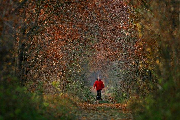 Poslední barevné podzimní dny. Aleje dubů na hrázích Haklovských rybníků lákají k odpolední procházce.