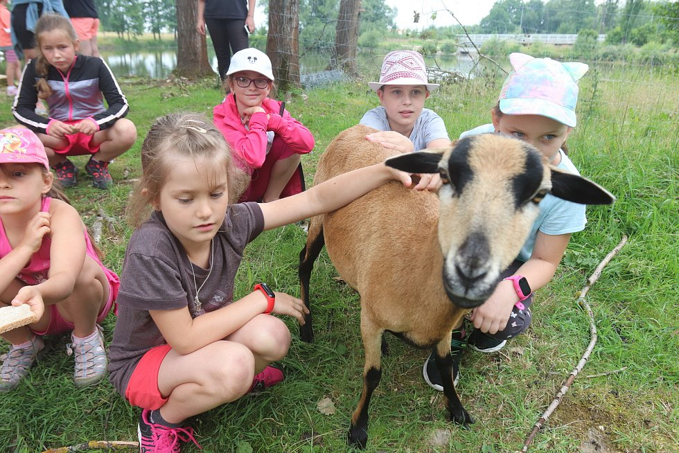 Příměstský tábor VSKH Pohodáři na malé farmě u Pilmanova rybníka v Českých Budějovicích.