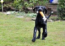 Zachráněné týrané štěně Marley z Prachatic.