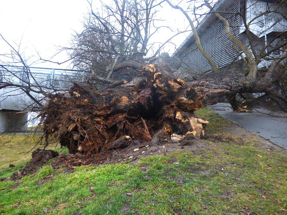 Vítr v pondělí vyvrátil strom u lávky vedoucí od Budvar arény ke sportovní hale.