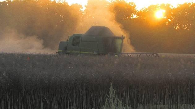 Jednou z důležitých plodin pro zemědělce je řepka. Náš snímek je ze sklizně řepky na poli mezi Bavorovicemi a Dasným.
