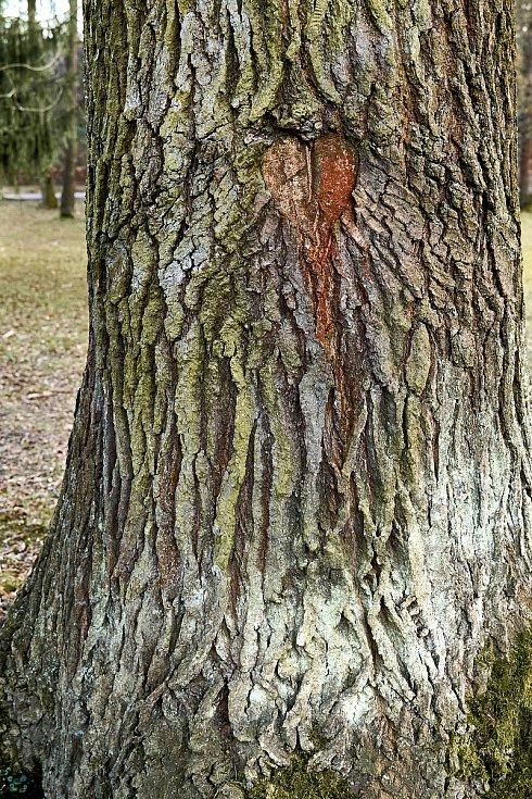 Duch stromový 9 - krvácející srdce