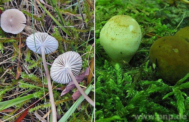 Mykologické objevy vpříhraničí.