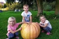 Letos Věra Pragerová z Lásenice na jaře zasadila čtyři sazenice dýně. Urodila se jí jedna jediná - 47,5 kg.