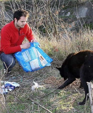 Pomáhají psím bezdomovcům vRumunsku.