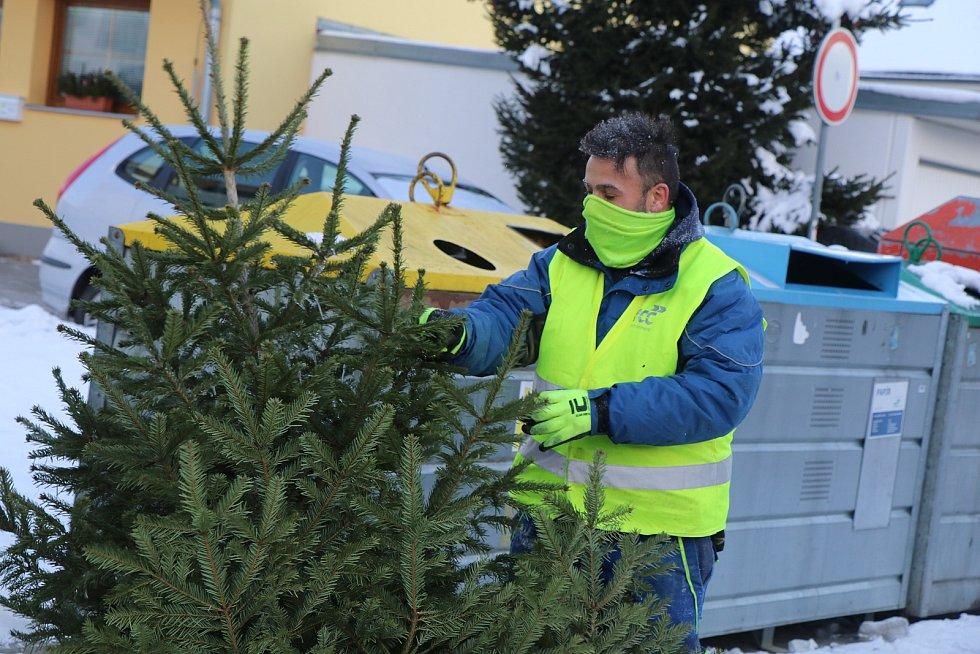 Začal svoz vánočních stromků v Českých Budějovicích.