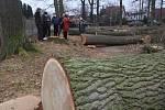 Poražené stromy u rodinných domů na Zavadilce.