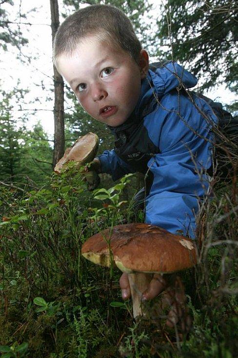 O úlovky nemají houbaři nouzi, i když si stěžují, že bývají červivé. Mokra je někdy moc. Dnes, na svatého Vavřince, by ho přibýt nemělo. Předpověď slibuje polojasno až oblačno s přeháňkami jen místy a teplotami do 19 stupňů.