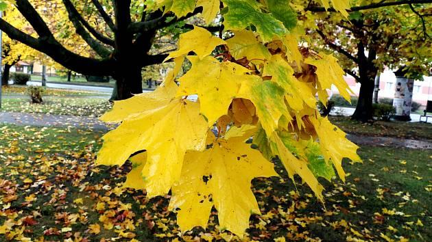 Podzim hraje všemi barvami. Podzimní žánry z Českých Budějovic.