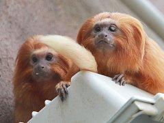 Přírůstky v zoo Ohrada