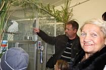 Chovatelé ptáků na budějovickém výstavišti pravidelně pořádají výstavu svých opeřených svěřenců. V říjnu výstava přilákala stovky návštěvníků.