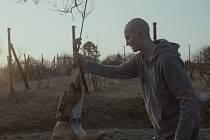 Jedním z taháků Febiofestu je drama Můj pes Killer.