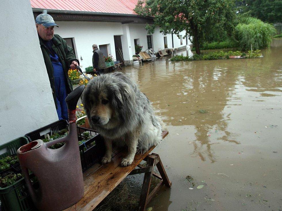 V Češňovicích se 4. srpna rozvodil Břehovský potok a zaplavil několik stavení.  Na snímku zaplavený statek u Hrachů.