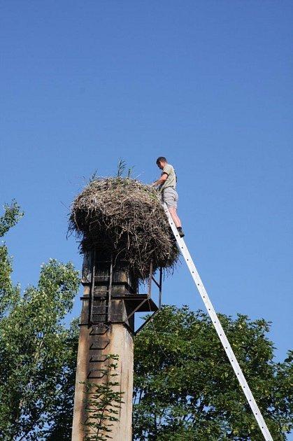 Odborníci letos na Českobudějovicku zkontrolovali 45čapích hnízd a okroužkovali 18mláďat.