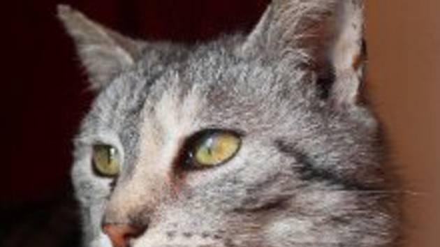 Spolek Kočka v srdci pomáhá.