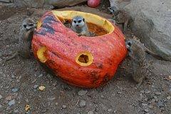 Halloweenský program připravila na sobotu hlubocká zoologická zahrada.