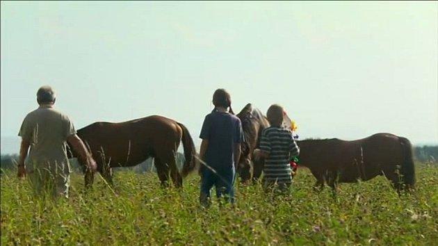 Jelelina na louce uNové Vsi byla svědkem scény, kdy ke koním přicházejí děti sJaromírem Hanzlíkem a pak je krmí jablky.