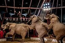 K atraktivní podívané v Cirkusu Humberto patří i drezúra slonů.