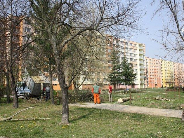 Regenerace sídliště Vltava znamená i kácení a novou výsadbu.