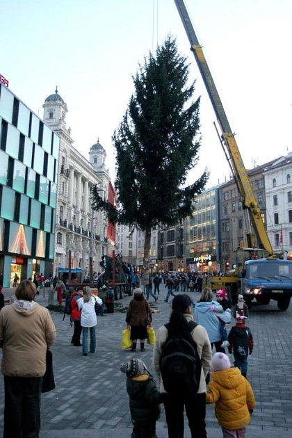 Sedmnáct metrů vysoký padesátiletý Těsnohlídkův strom je evropský unikát.
