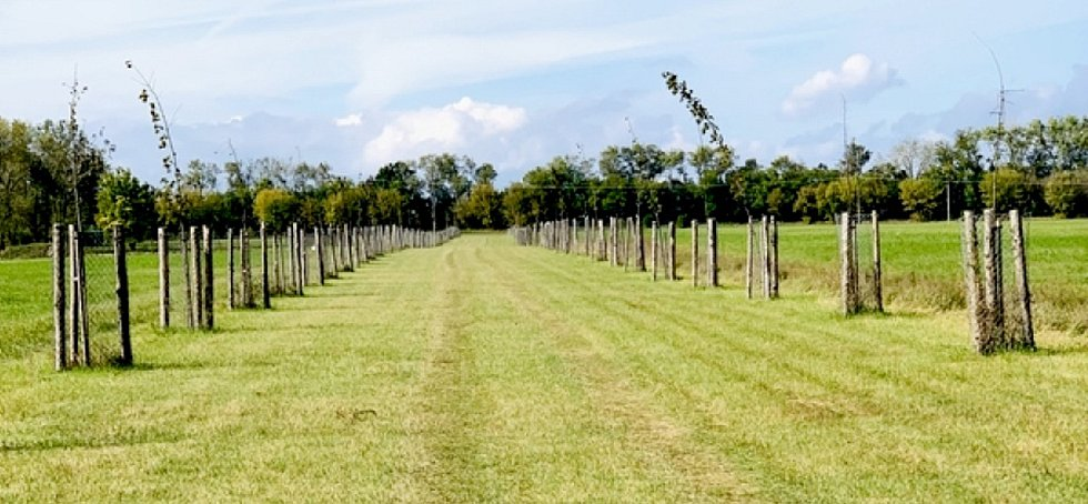 Sto stromů pro naši republiku, sto stromů pro Rohatec. Tato alej, která má celkem 100 stromů vznikla v loňském roce ke 100 letům  republiky. Pro obec má však mnohem vyšší význam. Kouzlo spočívá v tom, kdo tuto alej sadil.