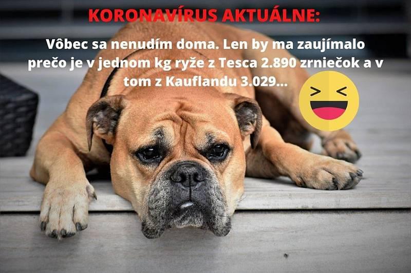 Vtipy s tématem koronaviru, které se nyní šíří po internetu a obzvlášť na sociálních sítích.