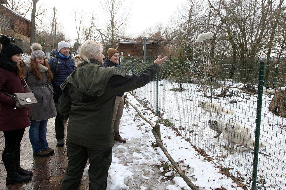 Zimní šampionát zvířat v brněnské ZOO.