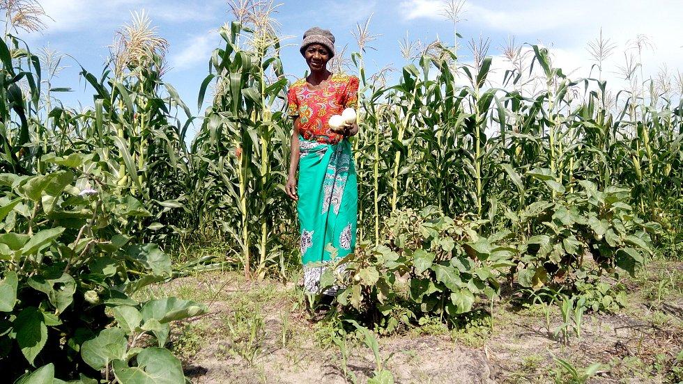 MENDELU pomáhá farmářům v Zambii