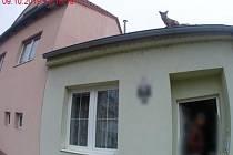Liška na střeše rodinného domu.