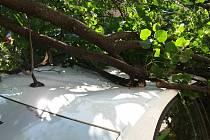 Spadlý strom v Botanické ulici v Brně v úterý odstraňovali hasiči.